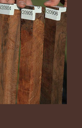 Pictures Of Brazilian Rosewood My Cool Guitars